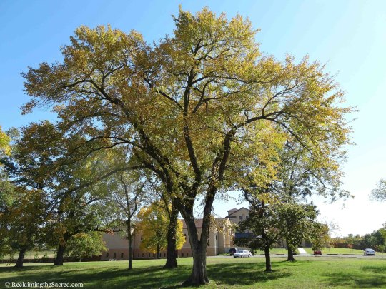 TreeWithMonastery